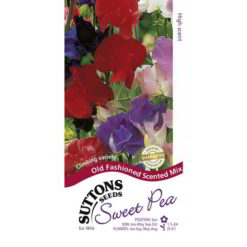 Sweet Pea Old Fashioned Scented Mix-0